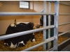 Przedszkole SŁONECZKO Szamotuły - Muzeum Rolnictwa  w Szreniawie